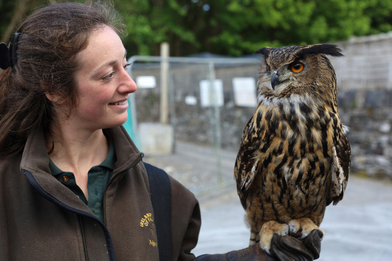 Falconer Mel and Dingle, a Eurasian eagle-owl prepare for an outing at the Ireland School of Falconry at Ashford Castle in County Mayo. Photo courtesy of Philip Courter.